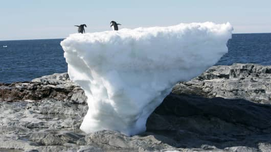 Adelie penguins stand atop a block of melting ice on a rocky shoreline at Cape Denison, Commonwealth Bay, in East Antarctica.
