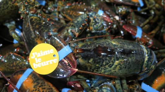 Lobsters caught off the coast of Maine.