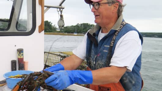 Lobsterman Jack Thomas catching lobster on his boat off the coast of Freeport, Maine.