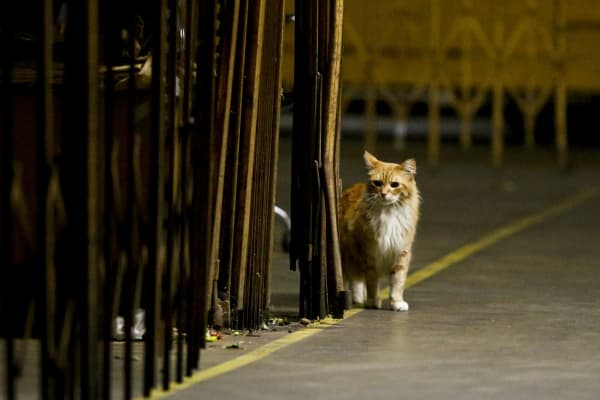 A working cat wanders the grounds of the Los Angeles Flower Market.