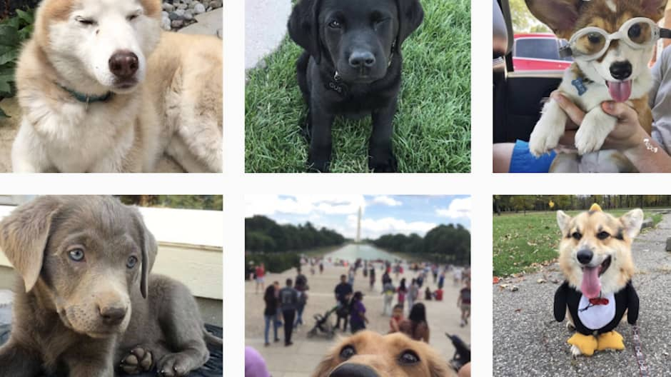 Judging dogs as a joke became a six-figure business for this college student
