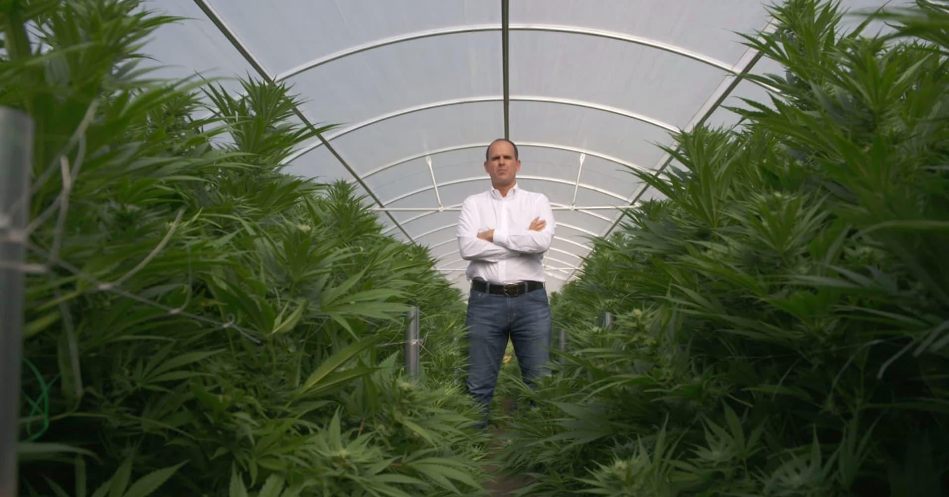 104614681 profitpotabout.1910x1000 Maconha Milionária: Episódio especial de 'O Sócio' aborda o mercado legal da erva na Califórnia