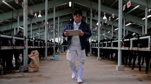 A livestock farmer at a livestock auction market on January 11, 2017 in Yabu, Japan.