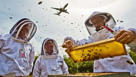 Apiaries at the Seattle-Tacoma International Airport