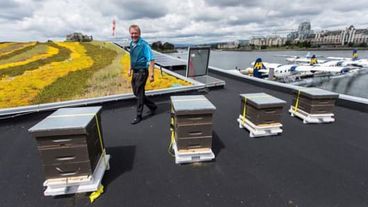 Hives on the roof of a floating airport terminal for seaplanes.