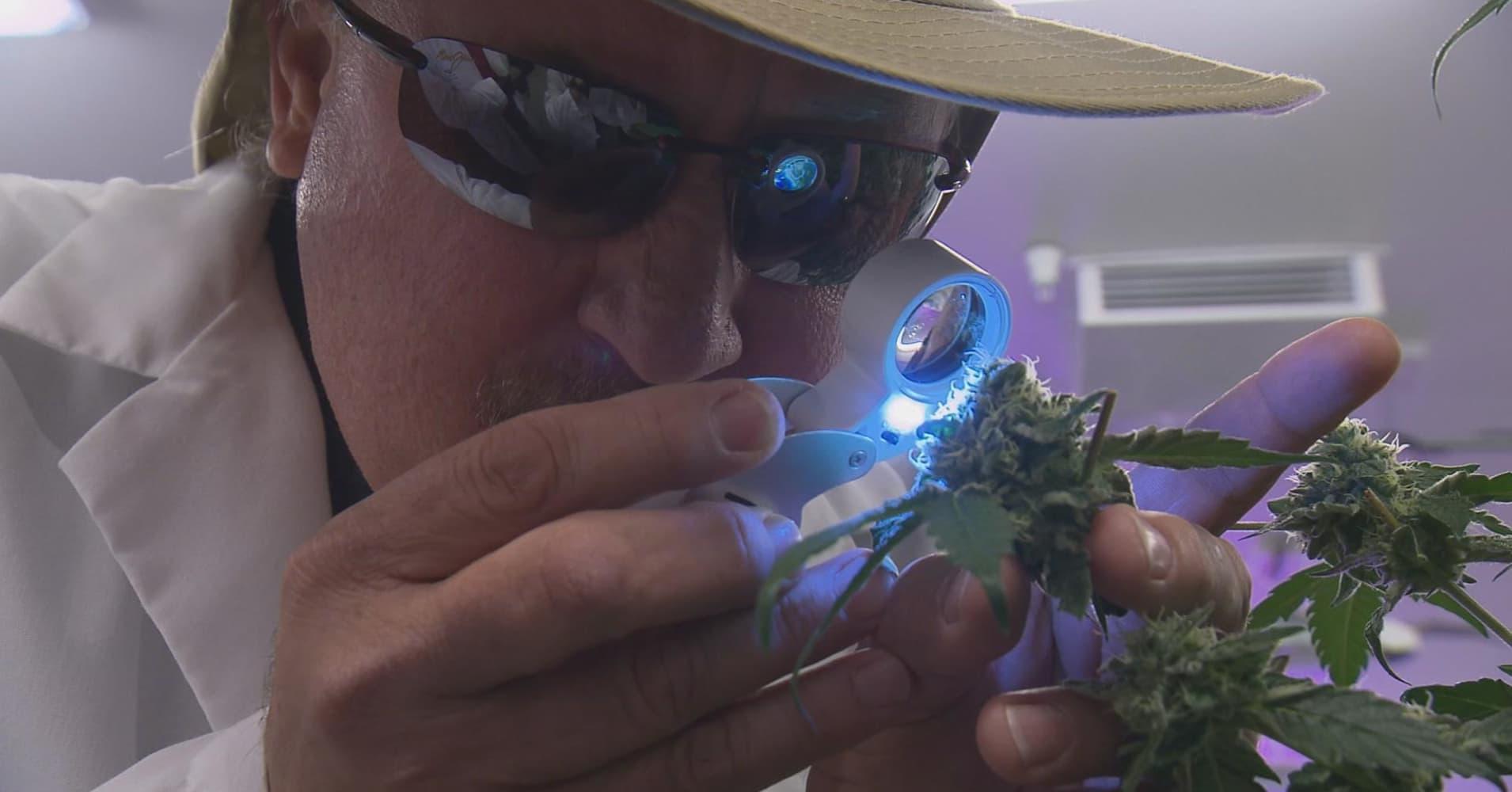 5 hot new careers created by marijuana legalization