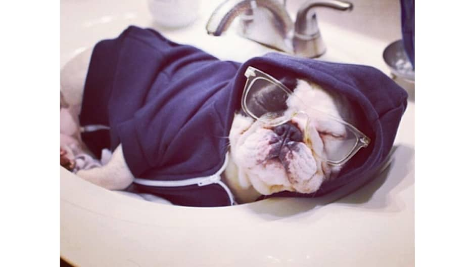 Manny the Frenchie has 3 million followers — here's how he deals with the fame
