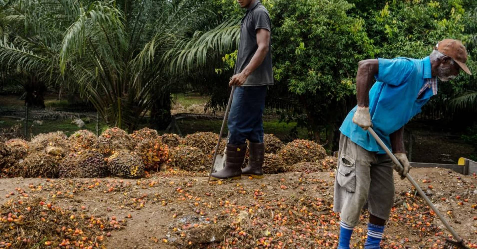 The fate of the world's premier bull market may lie with palm oil farmers