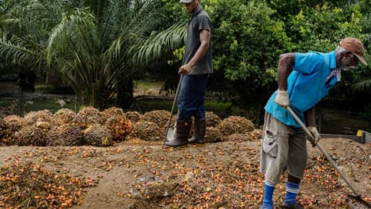 Workers gather harvested palm fruit at a palm oil plantation in Bukit Basout Estate, Perak State, Malaysia, on Wednesday, May 10, 2017.