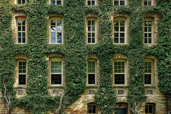 Ivy Covered Information Building at Princeton University