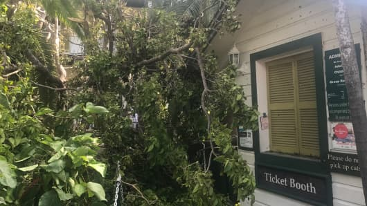 Branches knocked down on the Ernest Hemingway House property in Key West after Hurricane Irma swept through the area.