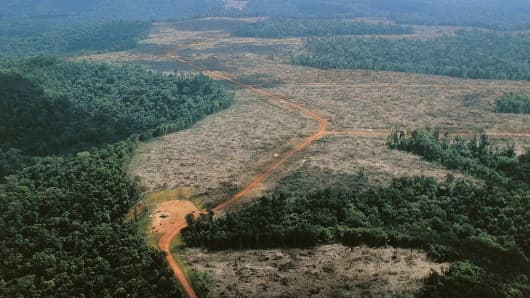 Tropical forests now emit more Carbon dioxide than they remove