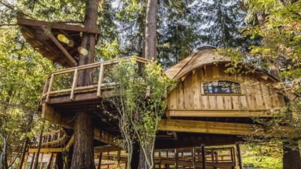 microsoft built treehouse offices for employees