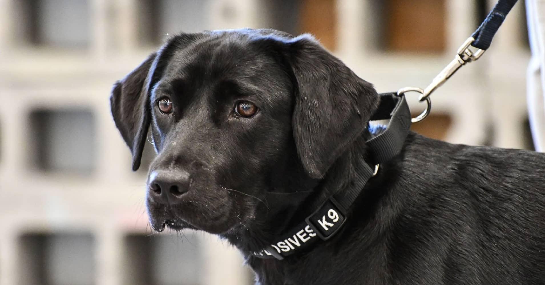 CIA dog Lulu
