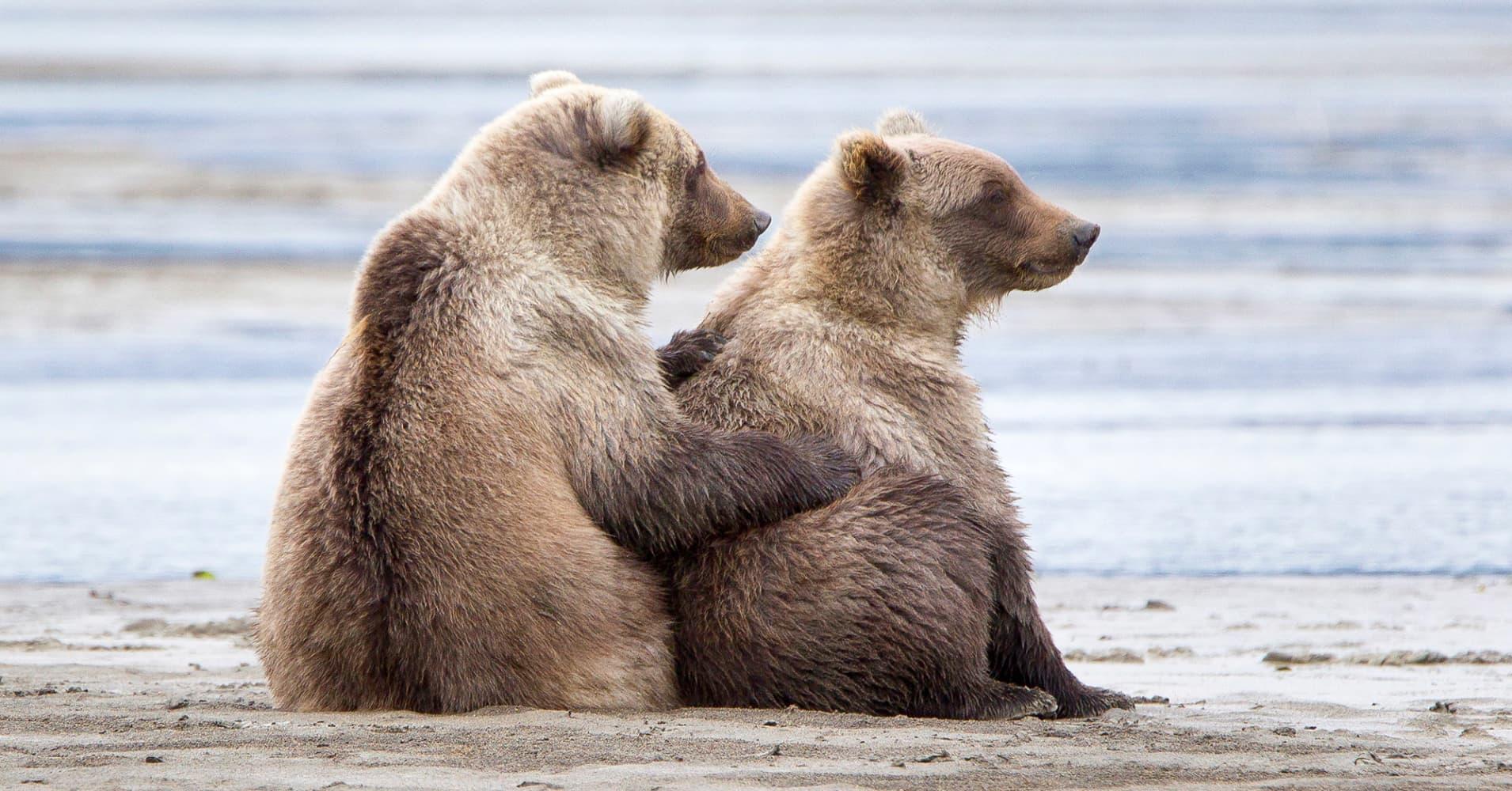 A Bear Market There's one market ana...