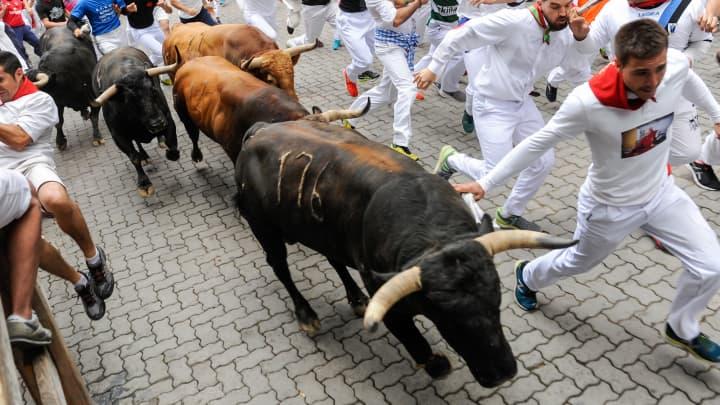 Five bulls
