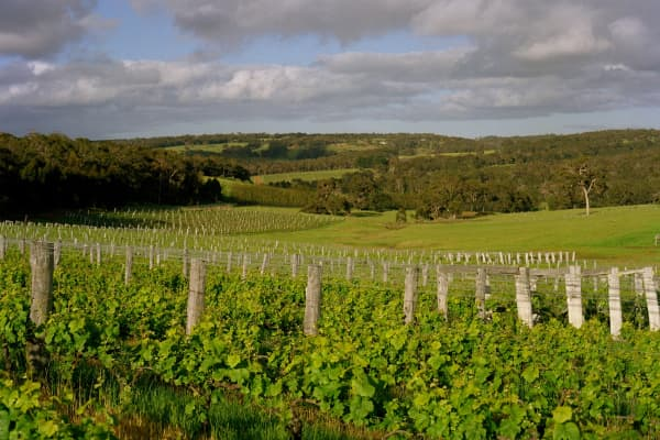 Vineyards at Margaret River, in the main wine growing region of South Western Australia