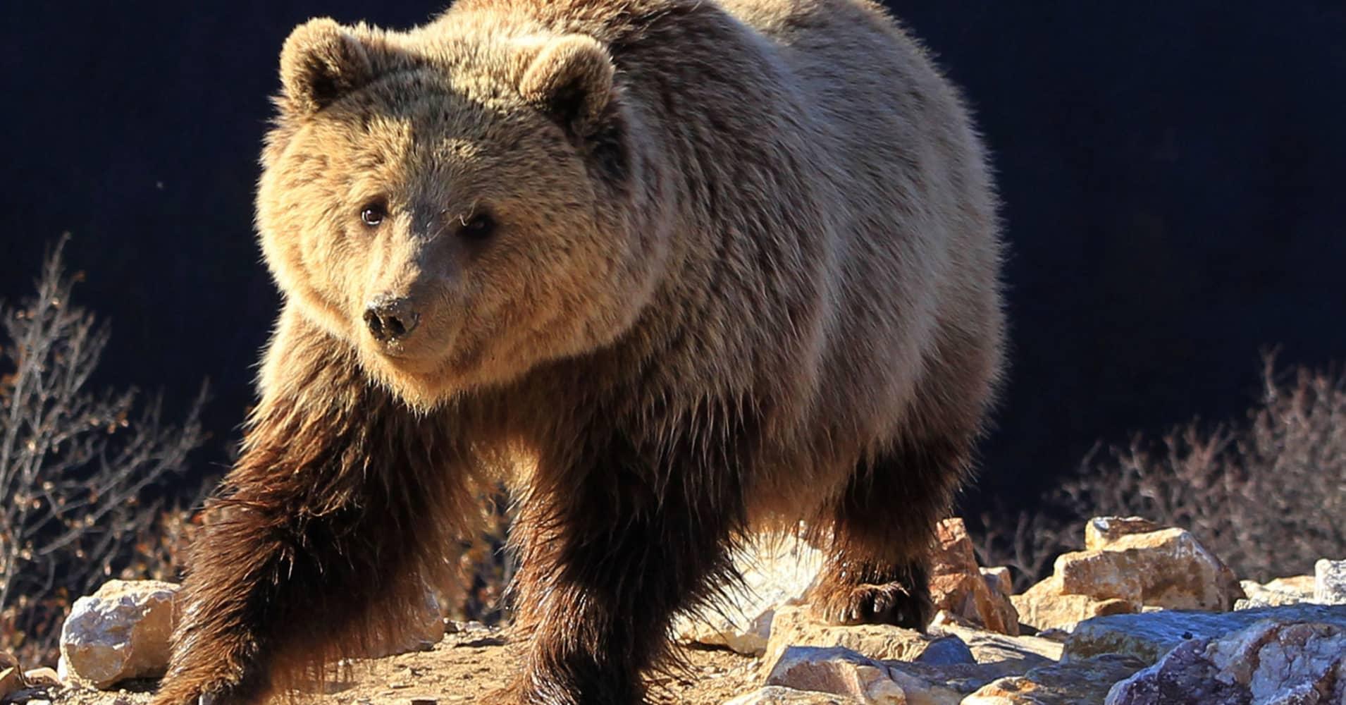Bear mark yusko