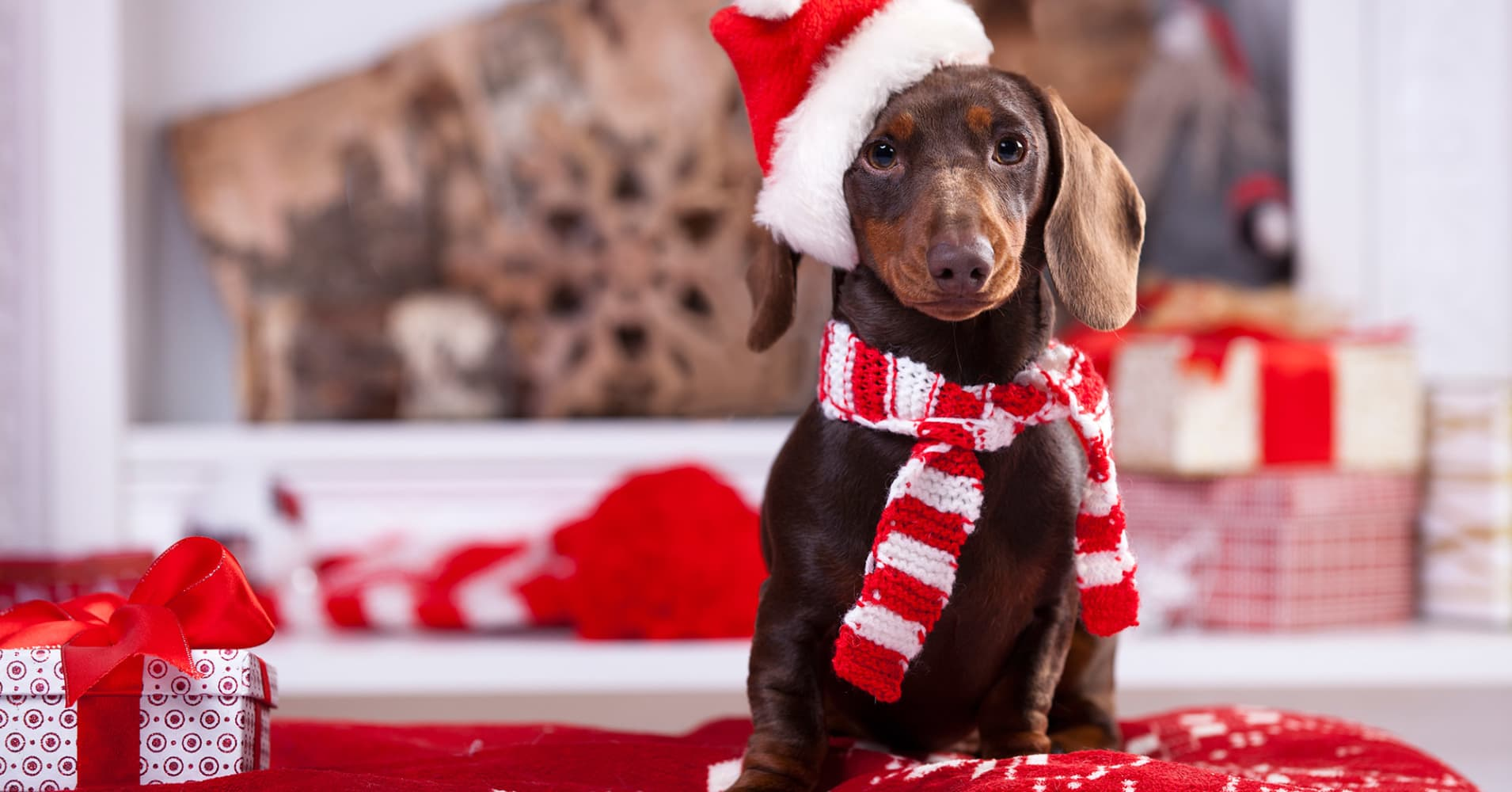 14 must-have gifts for your pets this holiday season