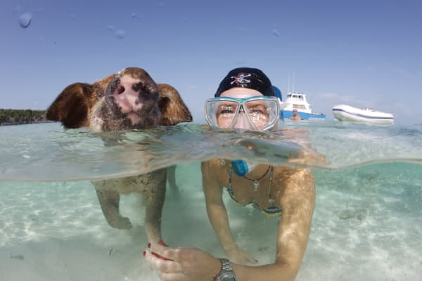 """Pig whisperer"" Nadine Umbscheiden snorkels with a pig in the Bahamas"