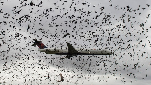 A flock of birds near a Delta plane as it lands at Reagan International Airport in Washington, DC.
