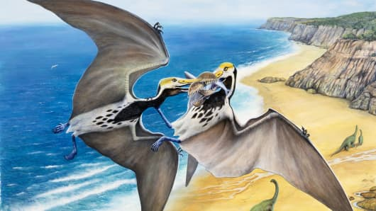 An illustration of two Pterosaurs (Pterosauria) with a prey.