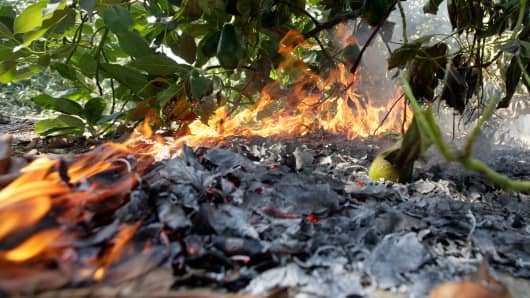 Debris burns under an avocado tree as a wildfire threatens an orchard in Ventura County, California.