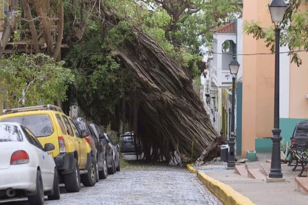 Damaged trees from Hurricane Maria in Old San Juan, Puerto Rico.