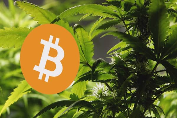 Bitcoin offers the cannabis industry an alternative to banks
