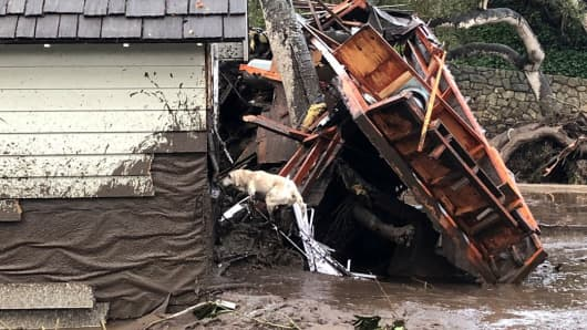 A search dog looks for victims in damaged homes after a mudslide in Montecito California U.S. in this