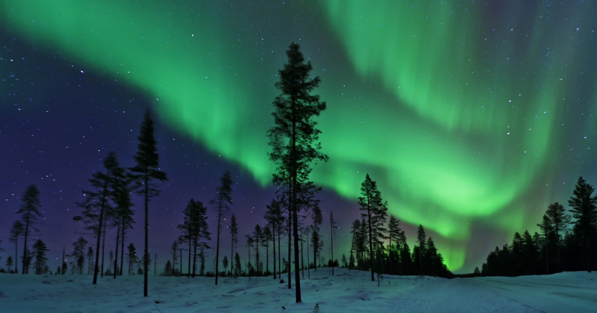 The Aurora Borealis captured in a clearing in a Swedish coniferous forest.