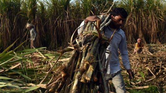 An Indian farmer carries sugarcane to load on a tractor to sell it at a nearby sugar mill in Modinagar in Ghaziabad, some 45km east of New Delhi, on January 31, 2018.