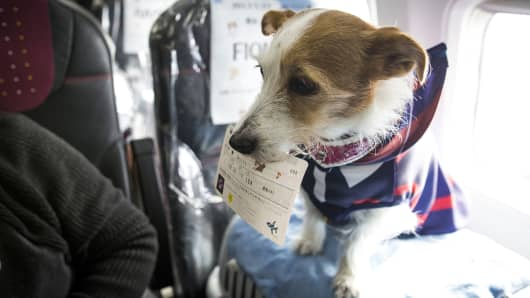 A dog with its flight ticket is seen in a plane in Chiba, Japan.