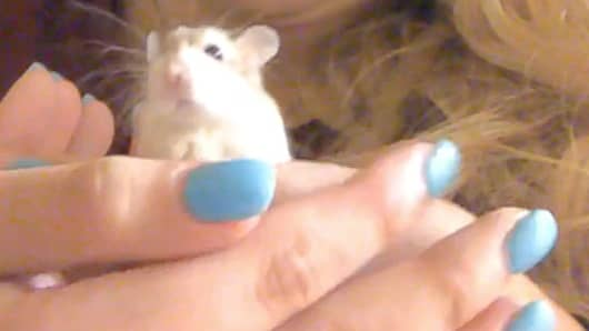 Pebbles the hamster.