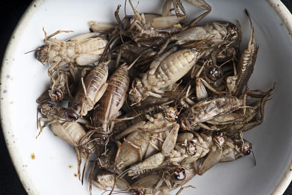 One of tech's most iconic CEOs wants us all to eat crickets
