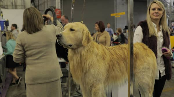 A look inside the life of a show-dog owner — and why they spends thousands for little monetary rewards