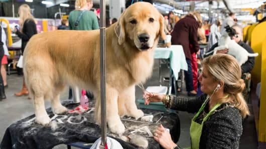 Why dog owners spend thousands to compete in shows