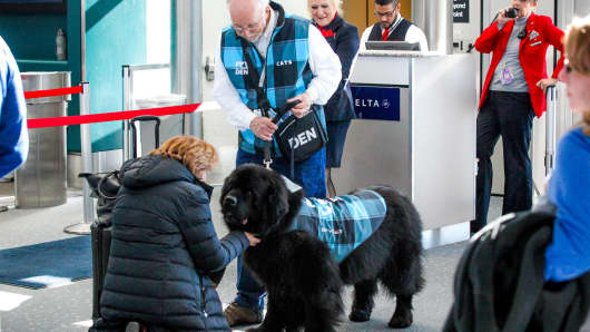 A therapy dog greets passengers at Denver International Airport.
