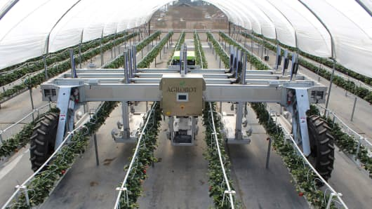 Strawberry robotic harvester Agrobot being tested with berry seller and investor Driscoll's in Oxnard, California.