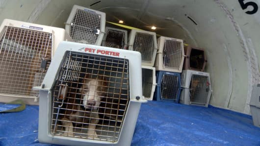 Pets are loaded onto the cargo hold of a plane.