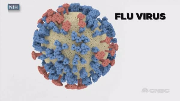 The quest to develop a universal flu vaccine