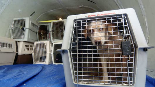 United Airlines Bans Long List Of Dog Breeds Chad