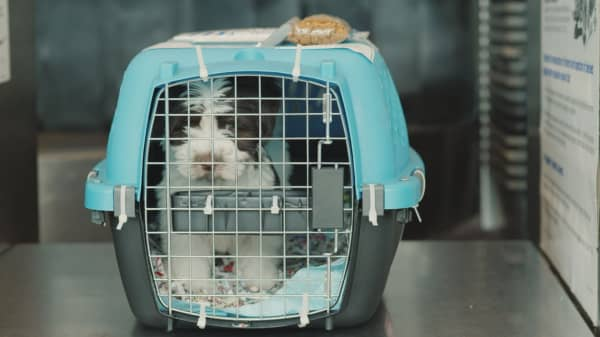 Why United Airlines is in the pet transporting business