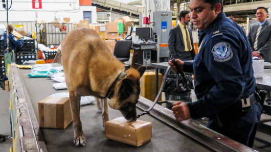 A Customs and Border Patrol agent and dog search mail packages for opioids.