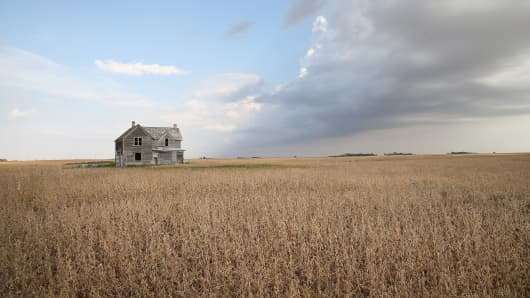 A soybean field near Salem, South Dakota.