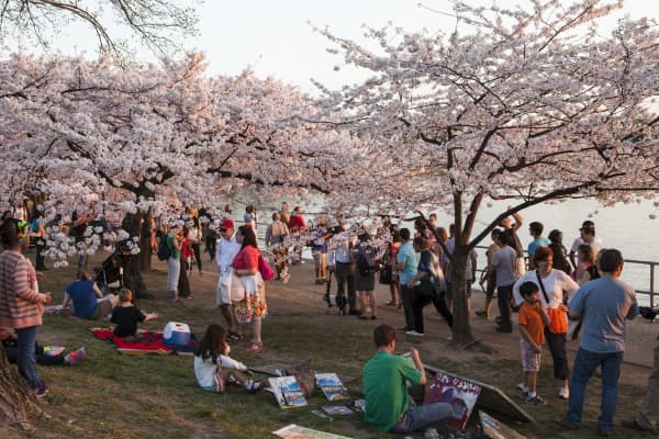 Crowds of tourists visit the Jefferson Memorial's Tidal Basin during the annual Cherry Blossom Festival.