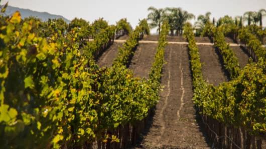 Temecula Valley wine region