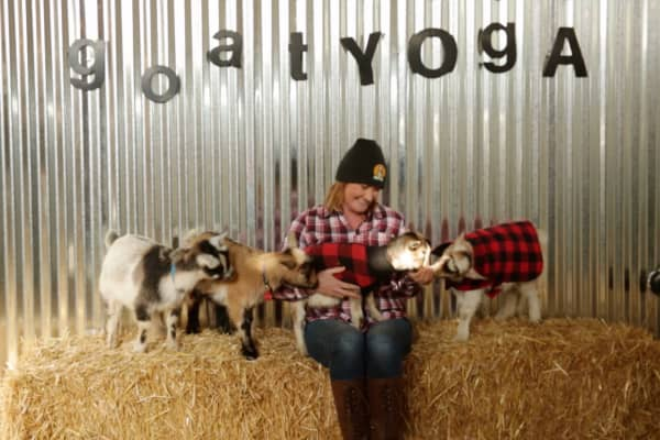 Lainey Morse started Original Goat Yoga in 2016.