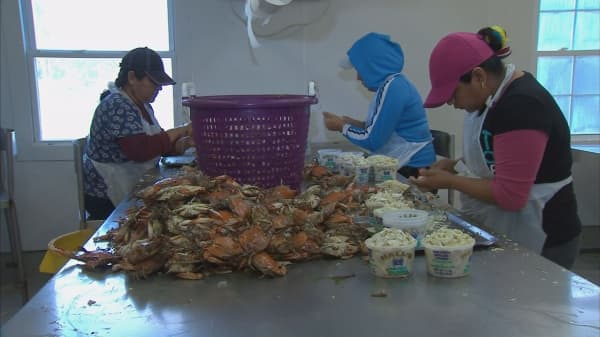 Crab industry hit by immigration restrictions