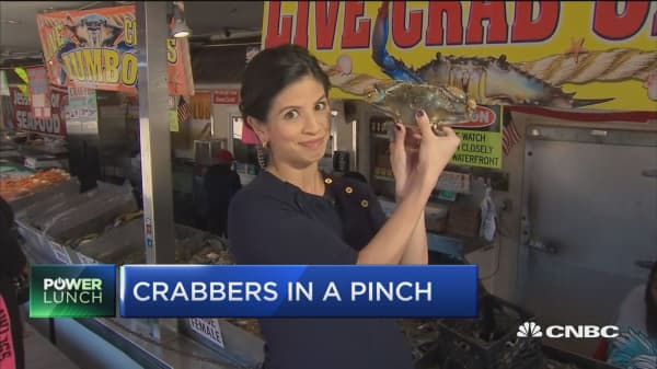 Crabbers industry in a pinch as immigration regulations tighten